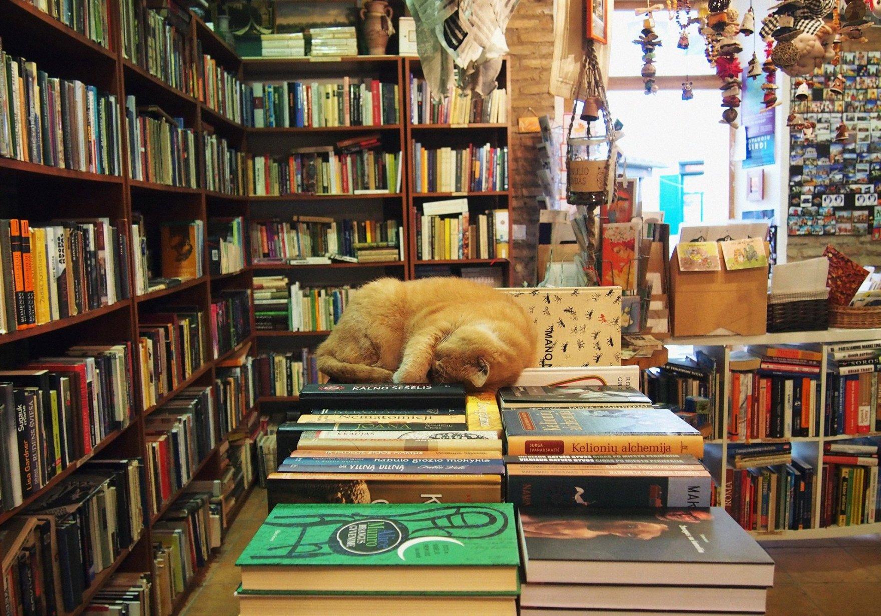book shop and souvenirs