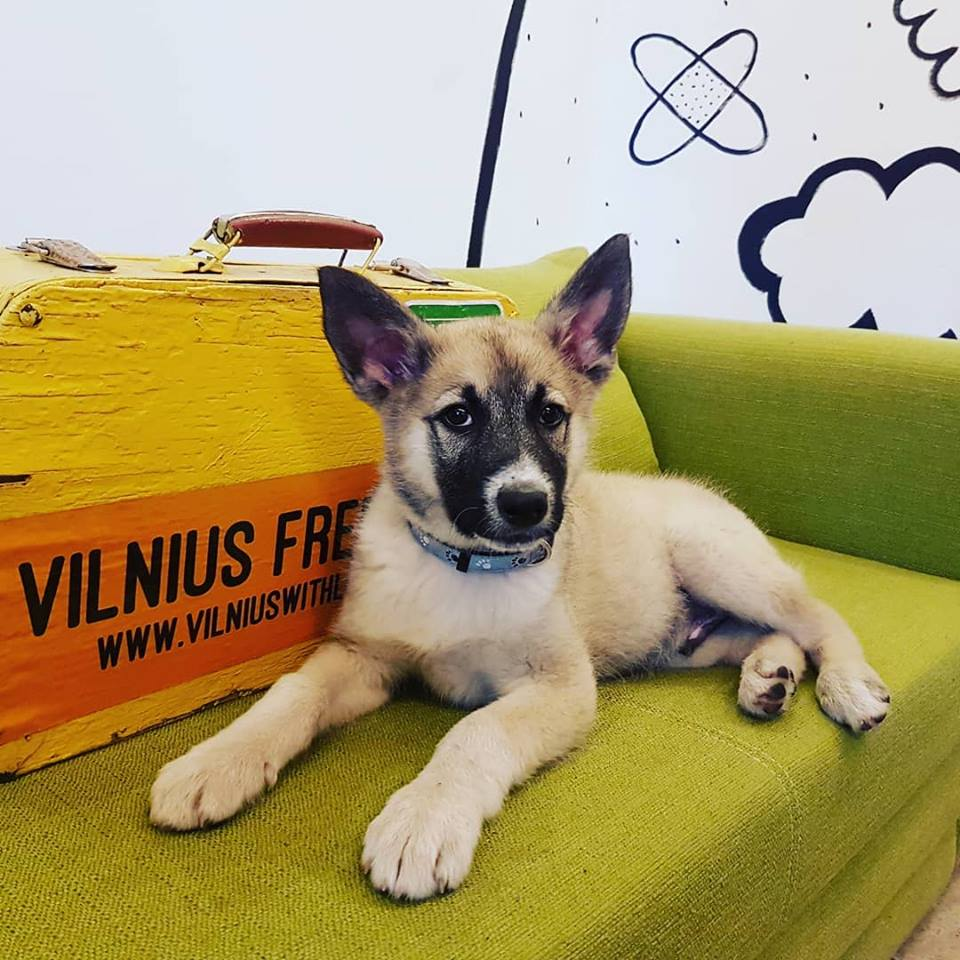 Dog friendly tours in Vilnius