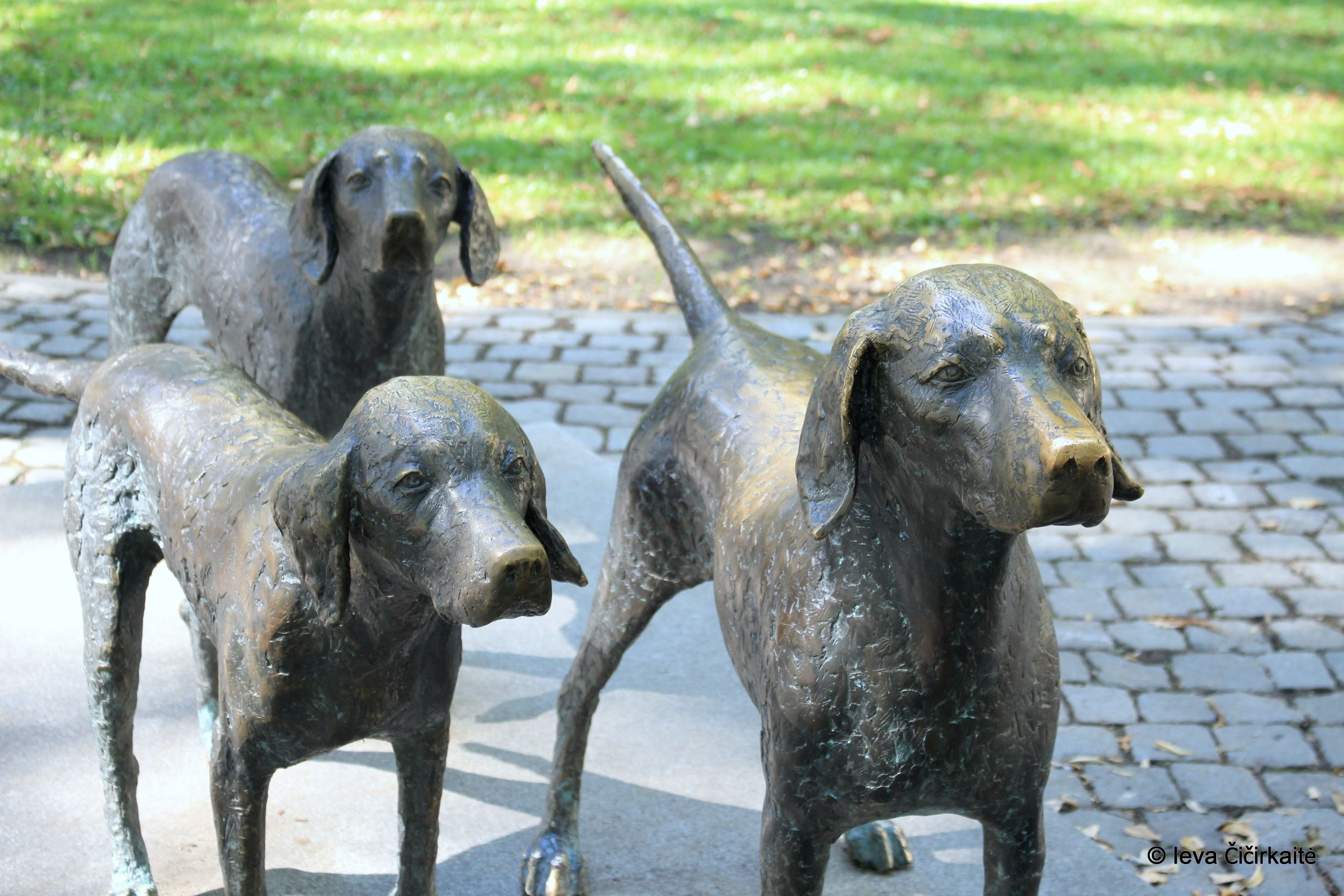 Sculpture of three dogs in Vilnius
