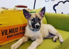 Vilnius + Dogs: yes or no? - Dog Friendly Vilnius
