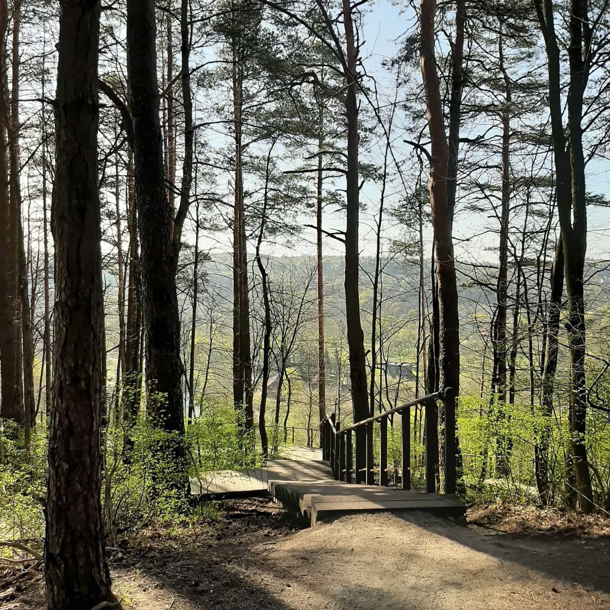 Puckoriu atodanga at Pavilniai Regional park