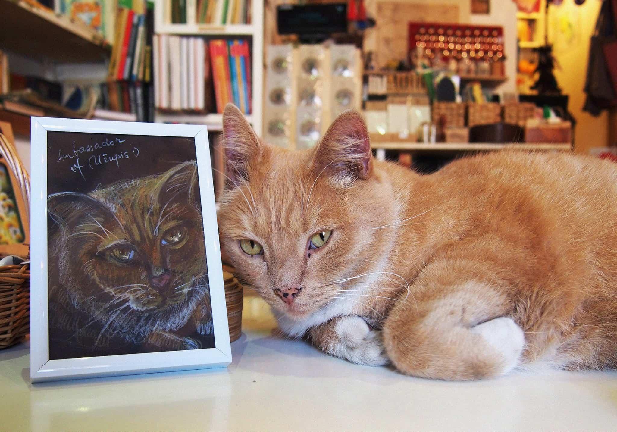 Ambassador cat in Uzupis
